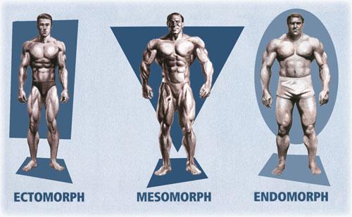 Tipos de cuerpo: Ecto, meso y endomorfo