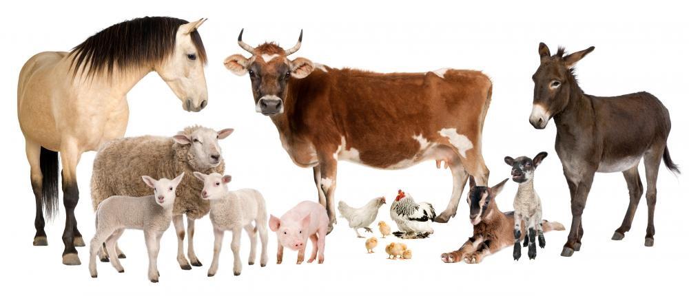12 culturistas destruyendo por completo el estereotipo vegano