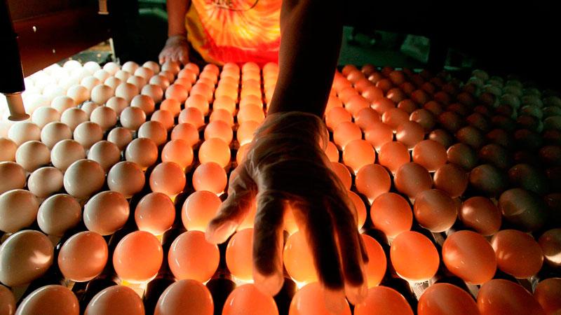 Huevos: ¿Crudos o cocinados?