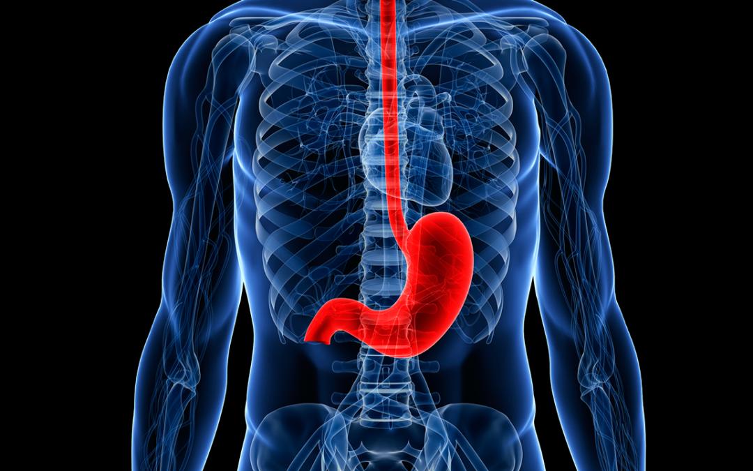 Bacterias intestinales y cómo mejorarlas