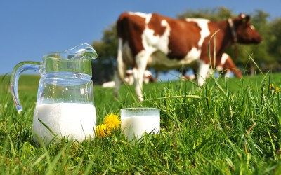 Lo que no sabes sobre la leche sin lactosa