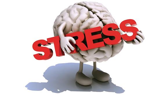 El cortisol, la hormona del estrés.